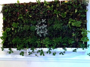 vegetable-wall-planter